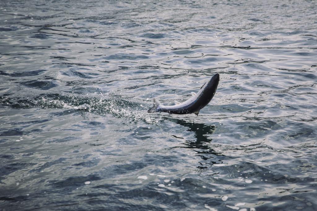 Foto: Marius Fiskum / Norwegian Seafood Council