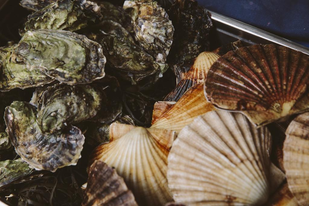 Cornelius-Fischrestaurant-Oyster-Dundee-Norwegen-muscheln