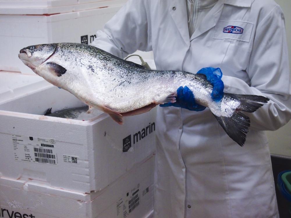 Fischmanufaktur Müritz Lachs aus Norwegen