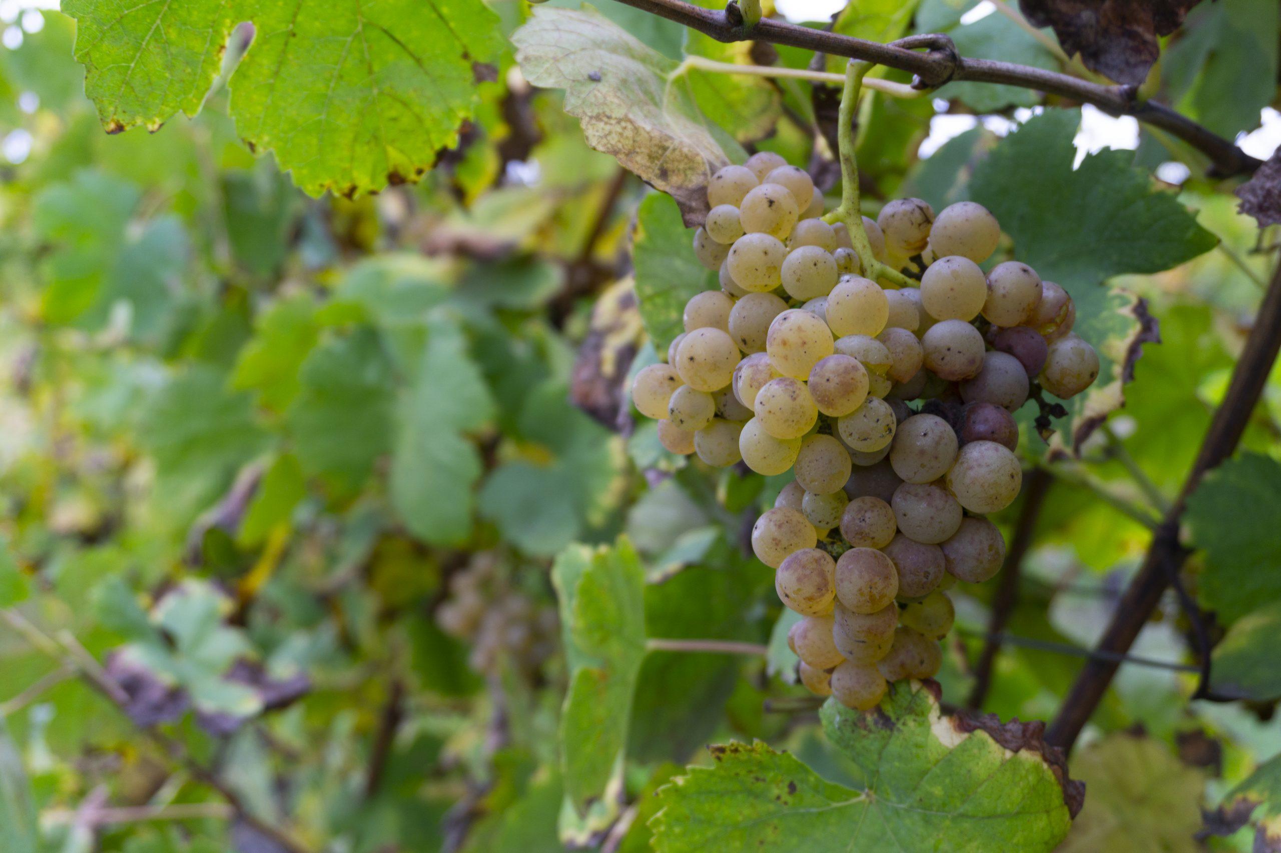 Vinho Verde Weinreise Portugal cookingaffair-28