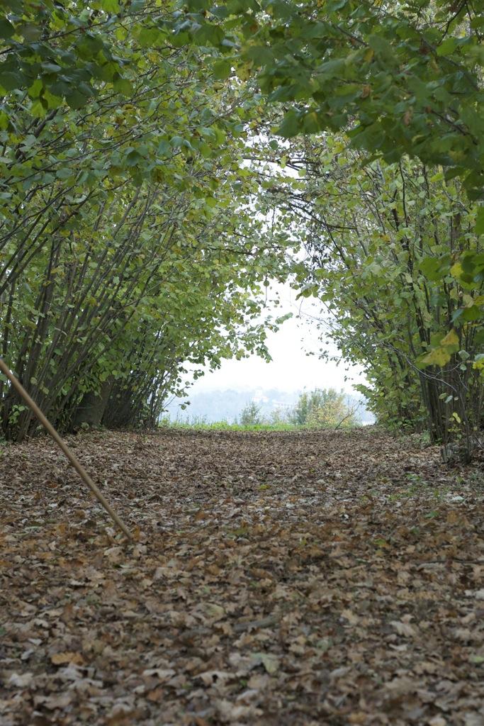 Unterwegs im Piemont – Alba und und die wilde Trüffeljagd